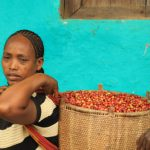 A woman carring a basket with ripe coffee cherries