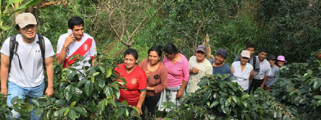 Producers in a coffee farm
