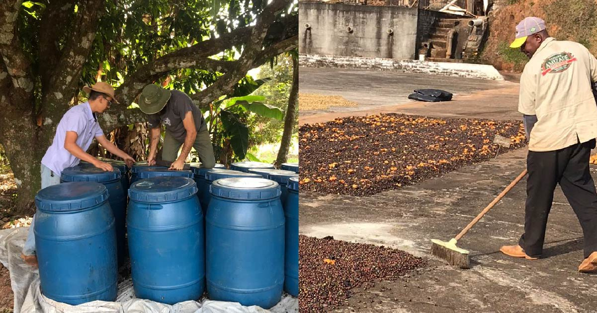 Fermenting Coffee With Fruit: A New Trend