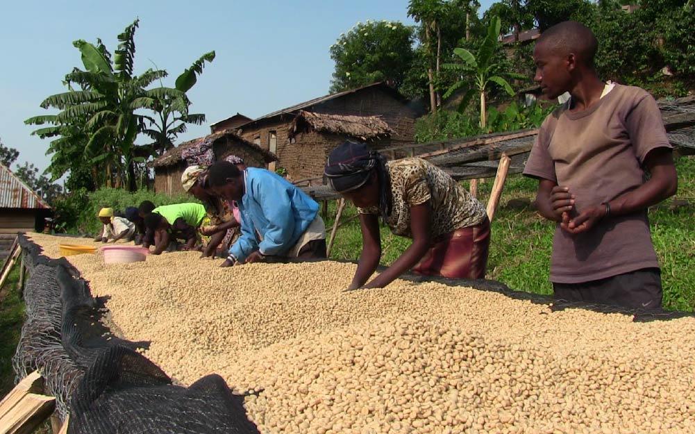 Café de la República Democrática del Congo