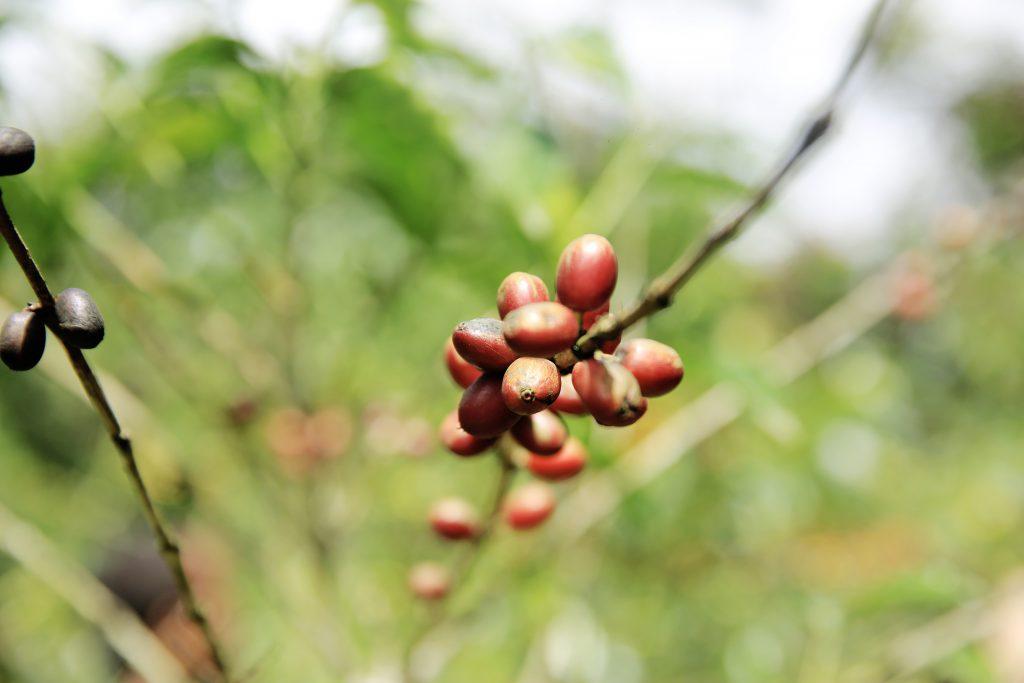 Bolsa de café de Nairobi
