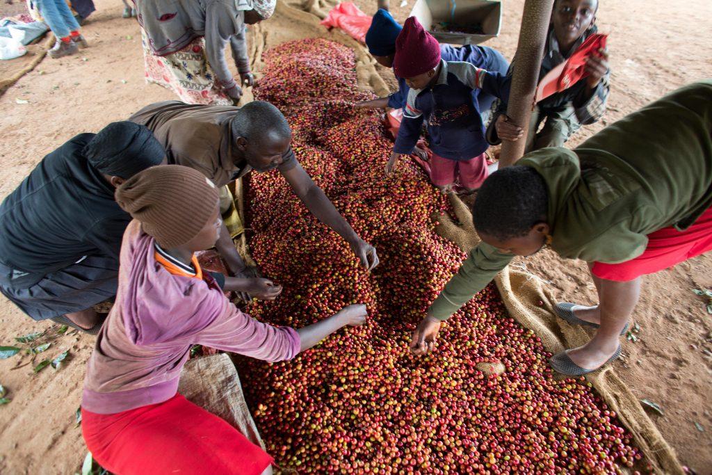 café de Kenia