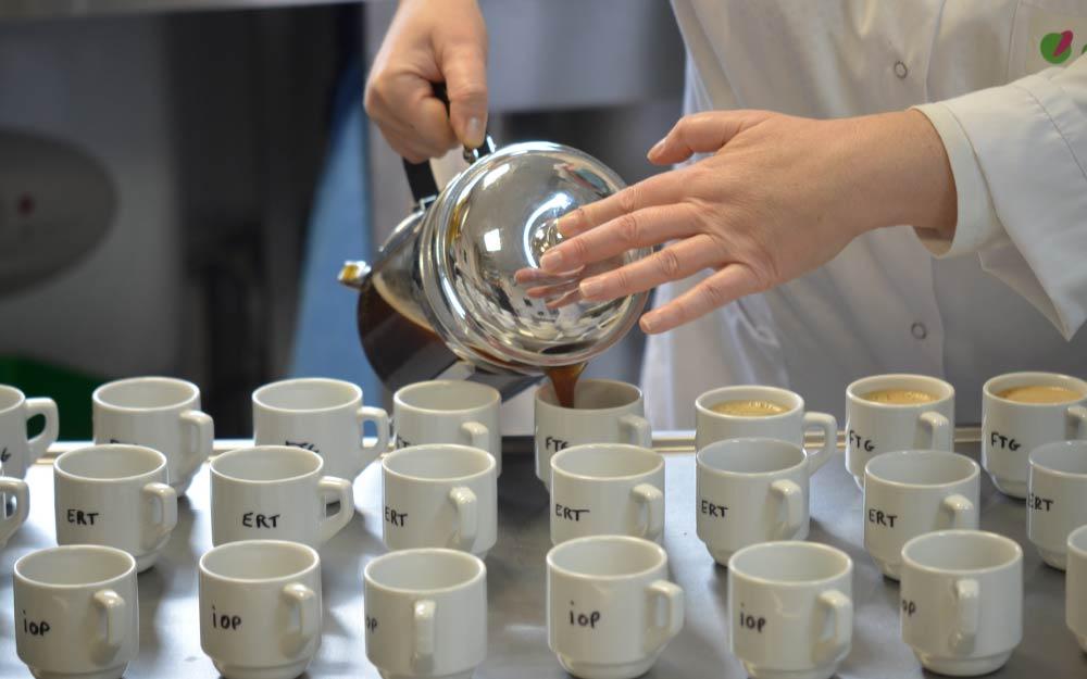 Especies de café