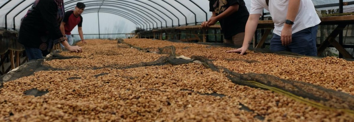 indonesian coffee beans