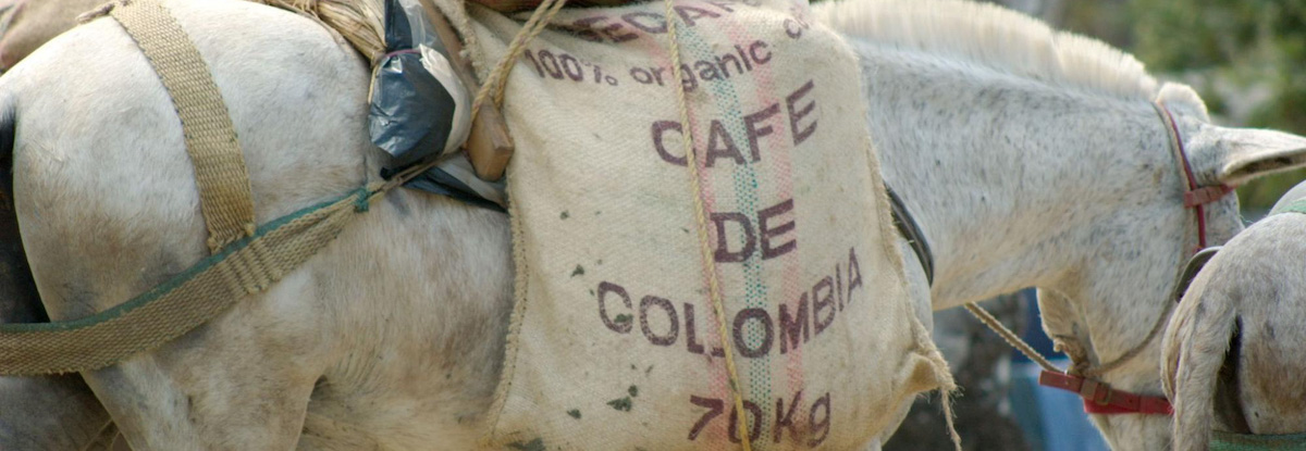 horse carrying colombian coffee